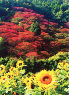 山田ひまわり園.jpg
