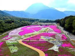 芝桜画像.jpg