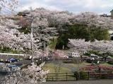 菊池公園.jpg